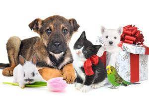 HomeSitting-Service Tierbetreuung